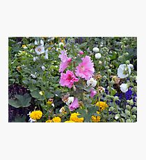 Colorful small flowers in the garden  Photographic Print