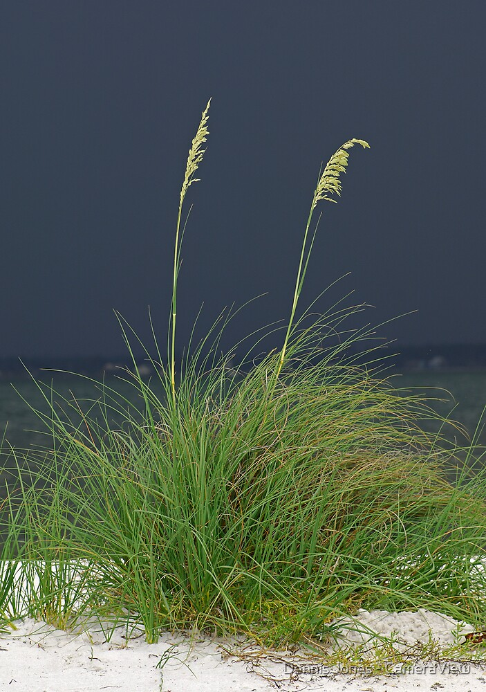 Waiting for the Rain by Dennis Jones - CameraView
