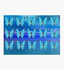 Blue Butterflies Photographic Print