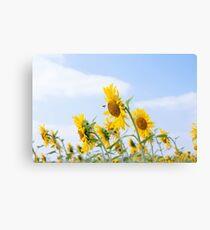 Summer sunflowers fiel landscape Canvas Print