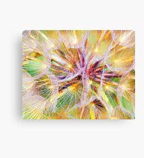 Nice meadow salsifiy flower macro view Canvas Print