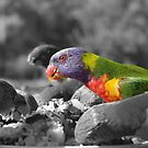 Parrot by Jayson Gaskell