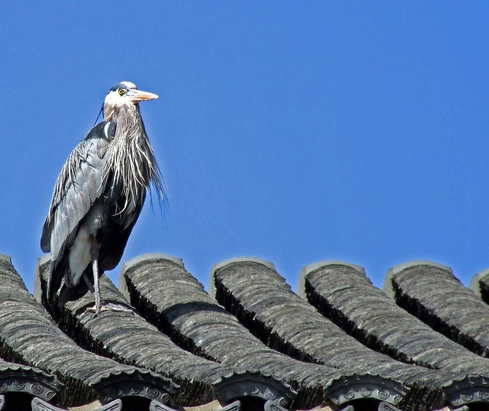 Heron by Patricia Shriver