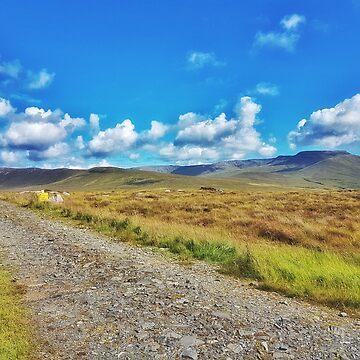 The Old Bog Road by paulmcnam