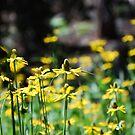 Yellow Meadow by HeavenOnEarth