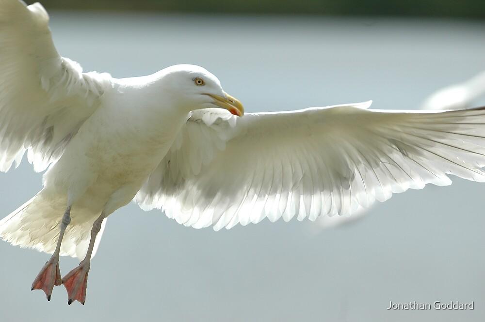 Seagull having fun by Jonathan Goddard