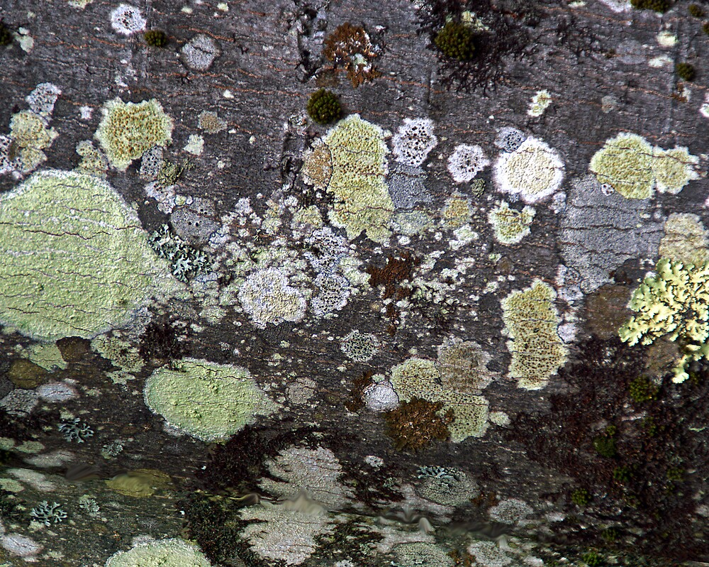 """Under the Sea - Part of """"The Living Surface"""" Series by Lynda Lehmann"""