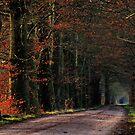 Last leaves in January morning light by jchanders