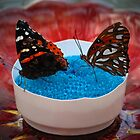 Two Lovely Butterflies by Cynthia48