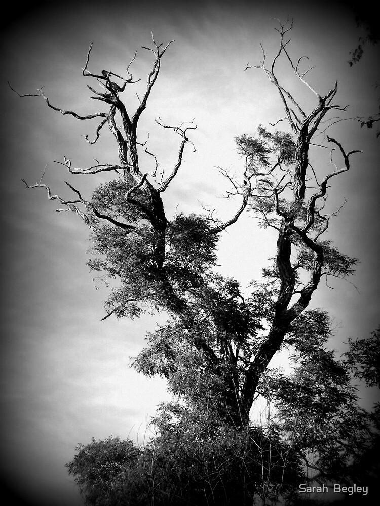 Three Crows by Sarah  Begley