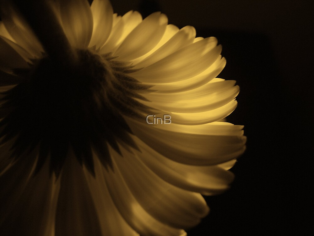 Golden Touch by CinB