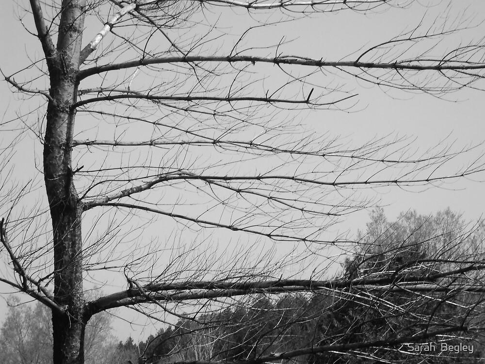 Bare Tree by Sarah  Begley