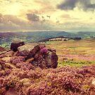 Peak District Heather  by Nicola  Pearson