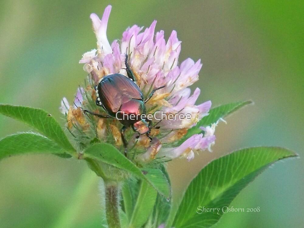 Pretty Beetle by ChereeCheree