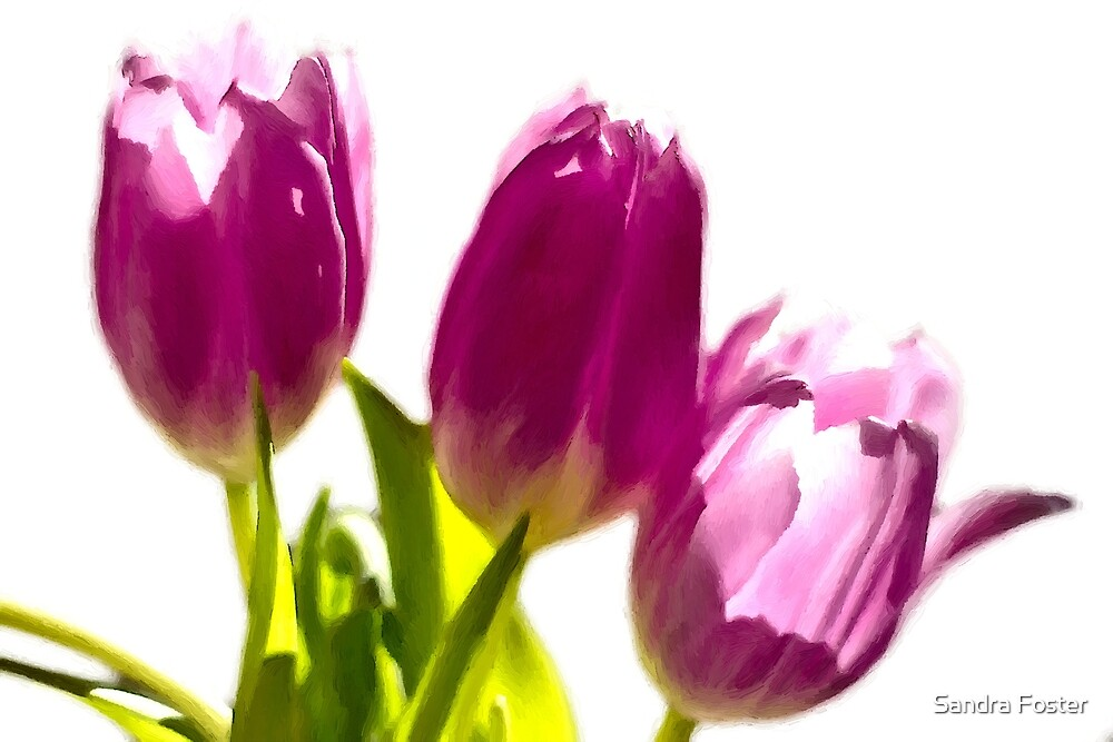 Tulips In The Morning Light - Digital Oil by Sandra Foster