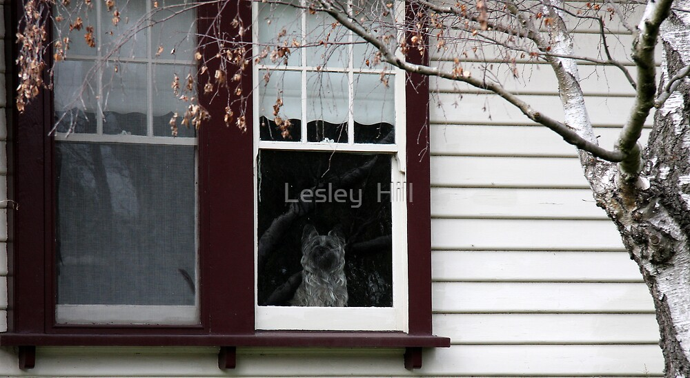 Favorite Spot! by Lesley  Hill