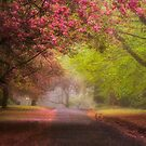 Spring Splendour - Mount Wilson NSW Australia  by Philip Johnson