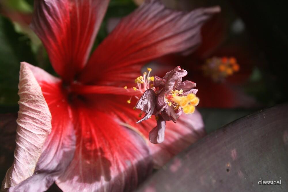Hidden Flower by classical