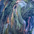 The Tree Bark Collection # 28 - The Magic Tree by Philip Johnson