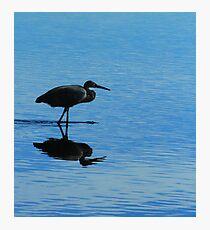 Blue Hunter Photographic Print