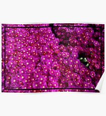Green Notes Found in Pinkish / Purplish   Floral Bed Poster