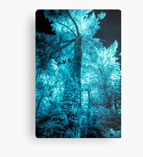 Infrared photography, white and blue turquoise tree Metal Print