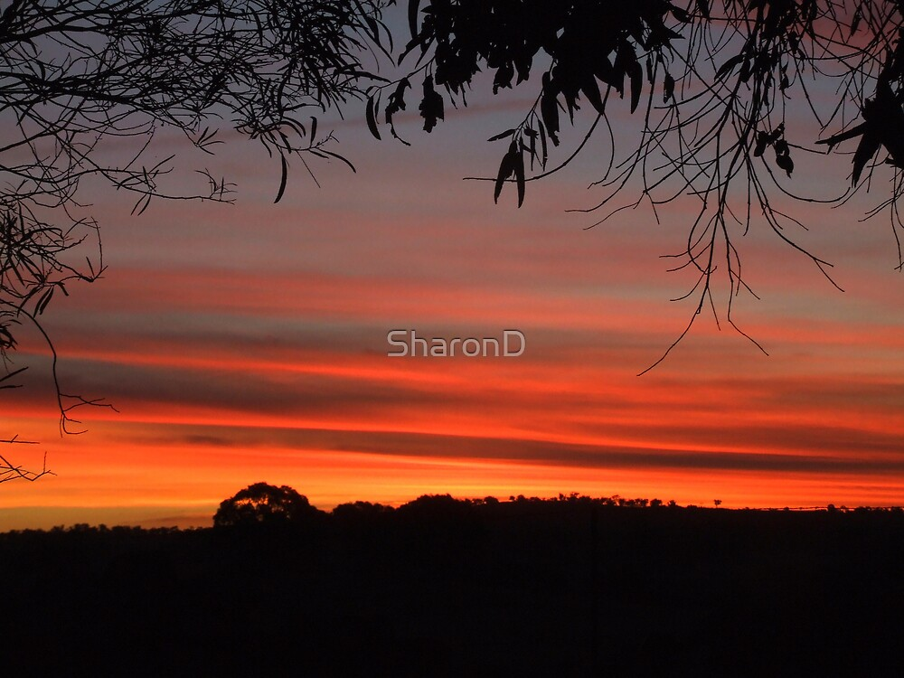 As the Sun Leaves by SharonD