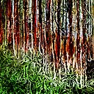"Rainforest - Collagraph/Relief Print by Belinda ""BillyLee"" NYE (Printmaker)"