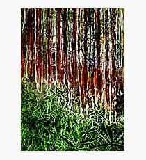 Rainforest - Collagraph/Relief Print Photographic Print
