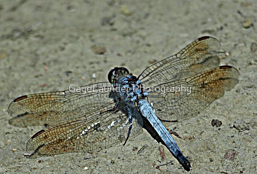Dragonfly Blue by GayeLaunder Photography