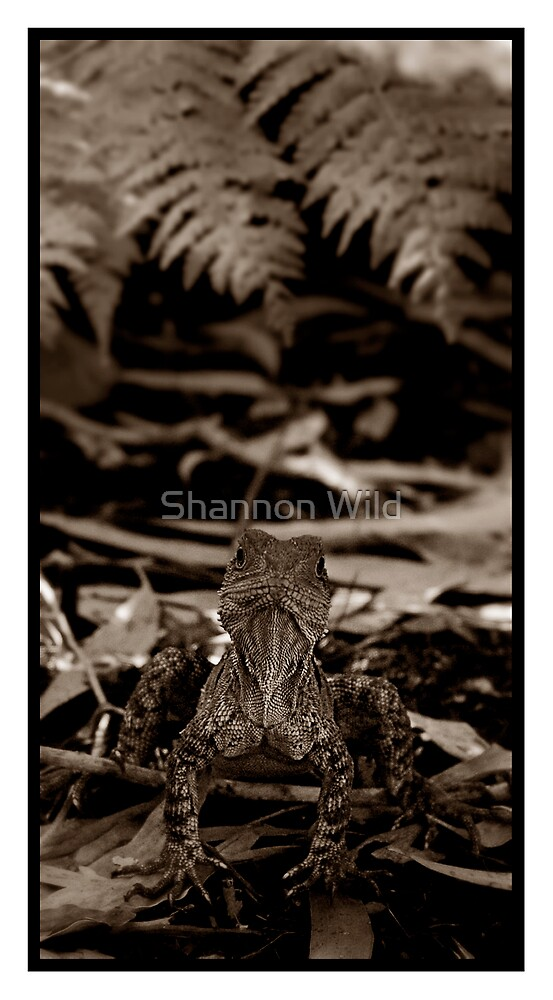 Eastern Water Dragon by Shannon Wild