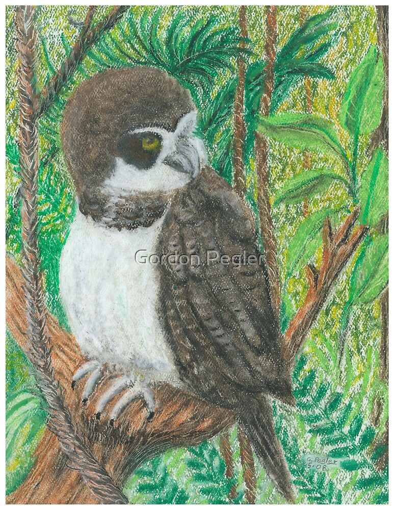 Spectacle Owl - Oil Pastels by Gordon Pegler