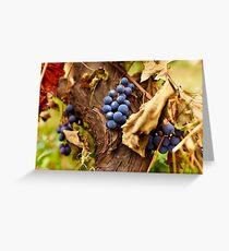 Blue grapes on a vine, closeup Greeting Card