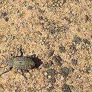 Interesting beetle by Wolska