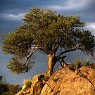 Acacia Tree at sunset by Wild at Heart Namibia