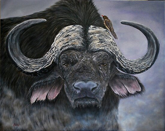 """""""Danger in the Dust"""" - Cape Buffalo oil painting by Avril Brand"""