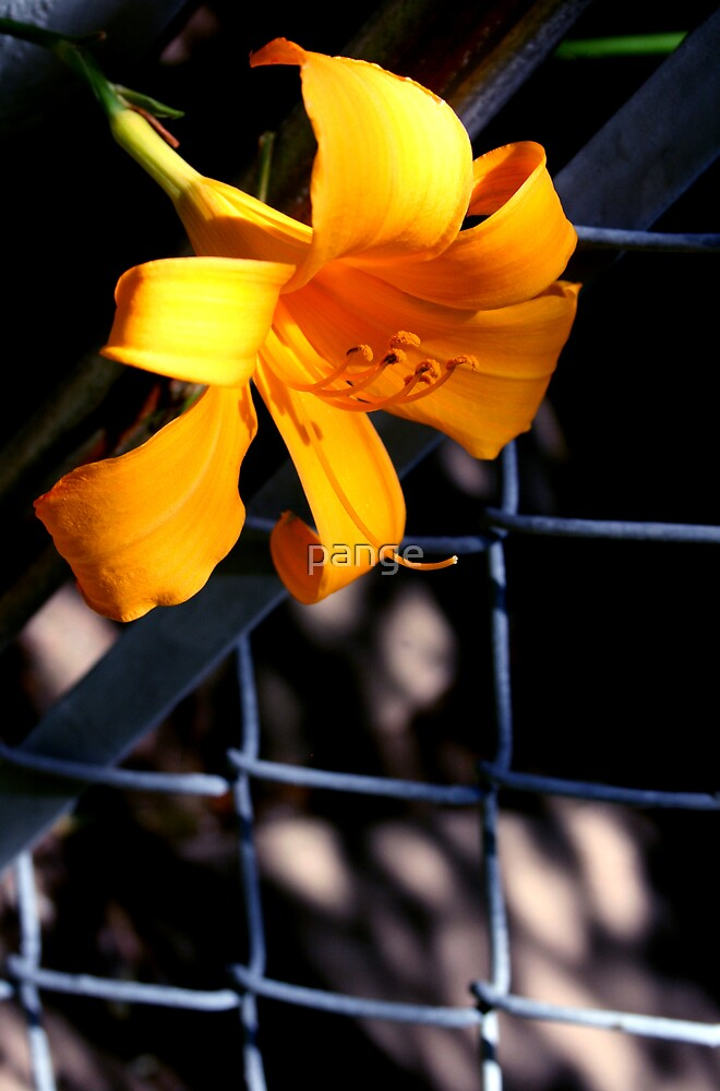 Chainlink Fence by pange