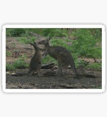 Kangaroos Kissing Sticker