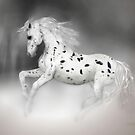 The Appaloosa  by Valerie Anne Kelly