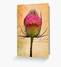 The Teasel Greeting Card