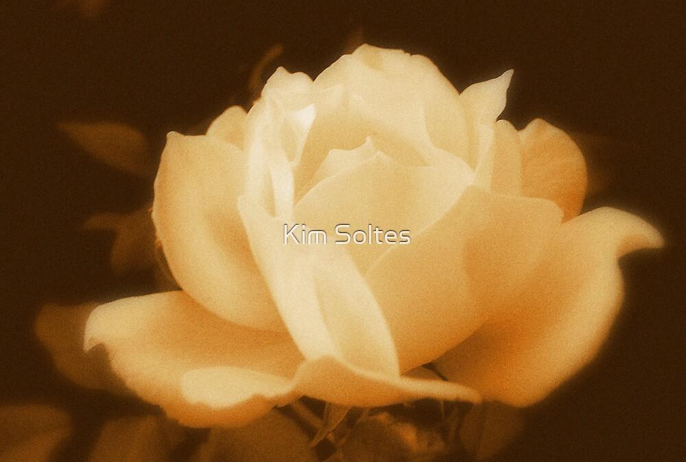 Antique Rose by Kim Soltes