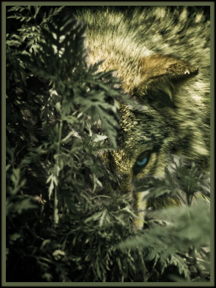 Wolf by mswebb