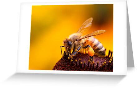 More Honey For Your Pollen by Bobby McLeod