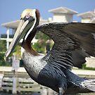 Pelican photo art print by Sheila McCrea
