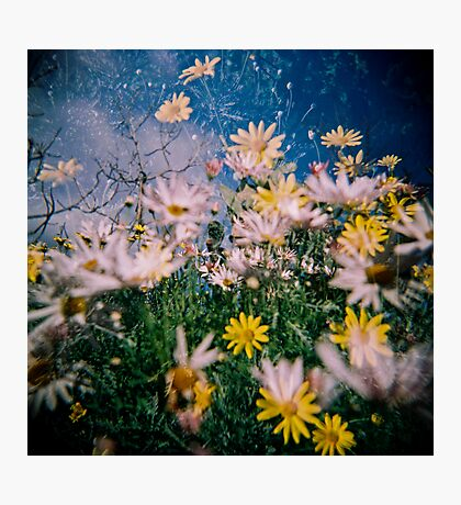 Daisy Frenzy Photographic Print