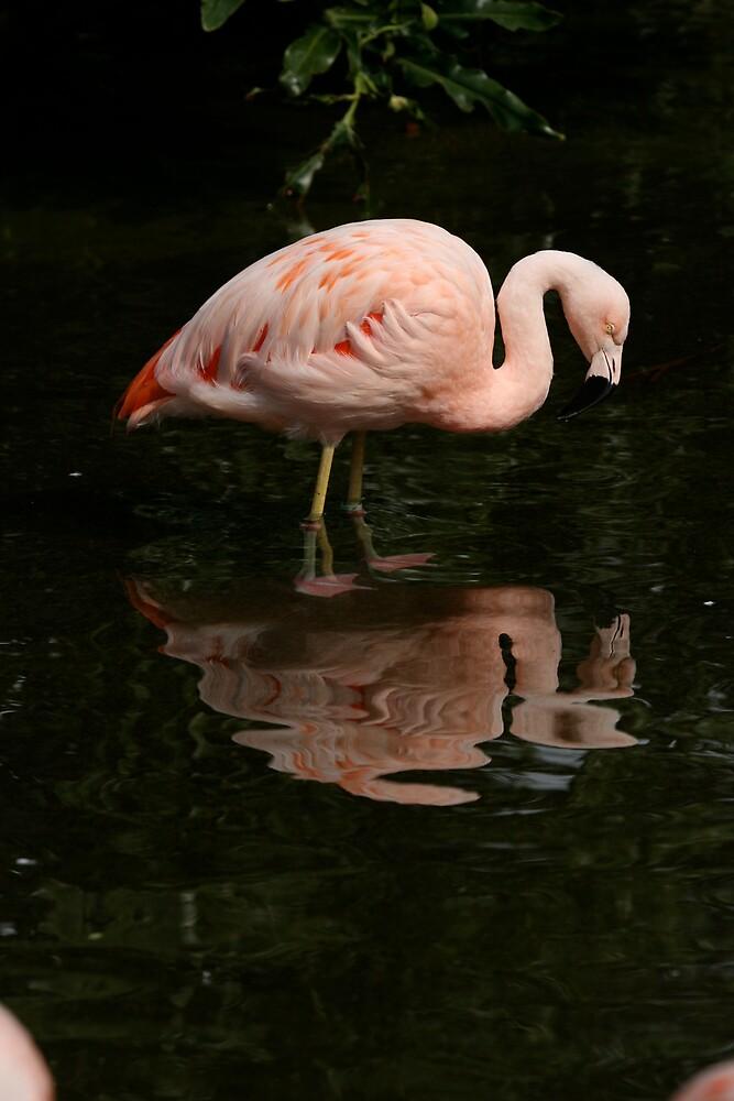 Flamingo by CherilynJoy