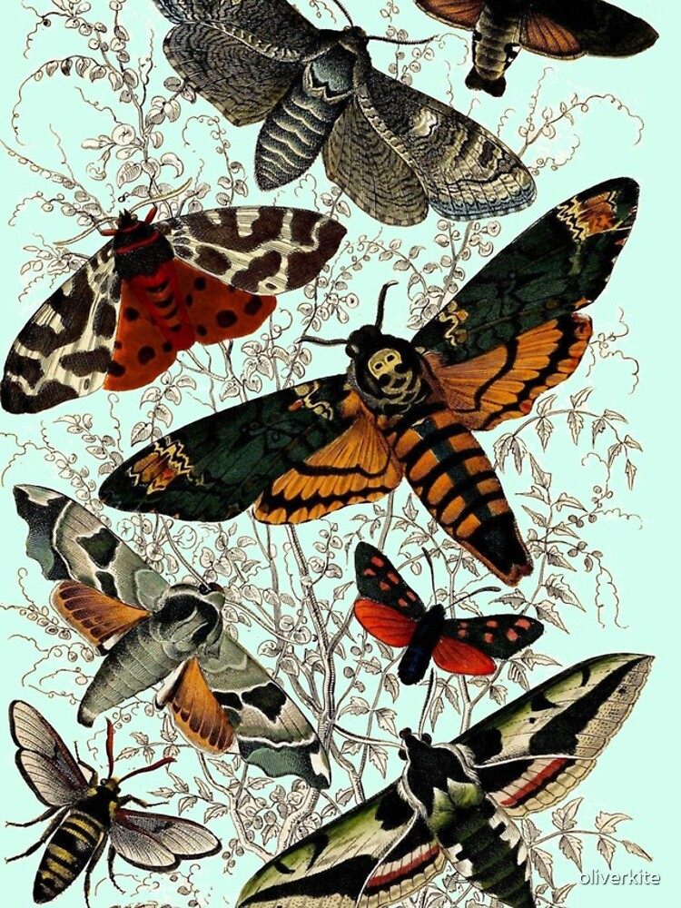 Victorian Moth Insects illustration by oliverkite