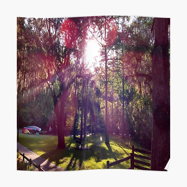 Sun in the Trees Poster