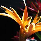 flores en la zona tropical by Bernhard Matejka