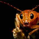 Orange Beetle 2 by Frank Yuwono